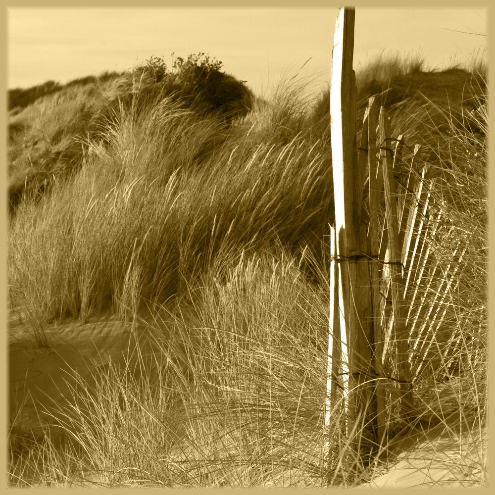 Dunes et hoyats... by photosdan