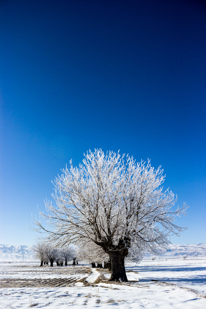 white tree by hesamg59