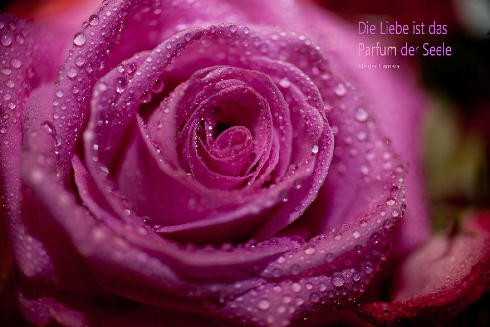 Die Liebe ist das Parfum der Seele  by Nili Photography