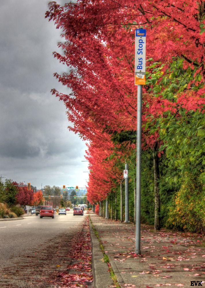 Autumn Bus Stop~EVK by ErnieKasper