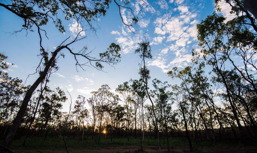 Morning in the bush by steveo074