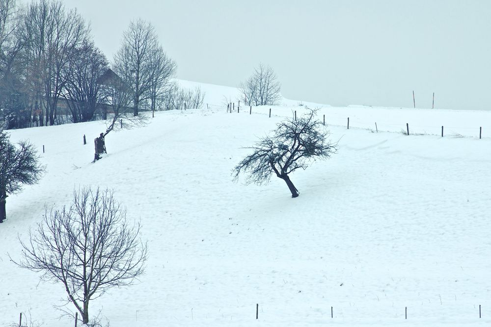 Winter Landscape by horslip