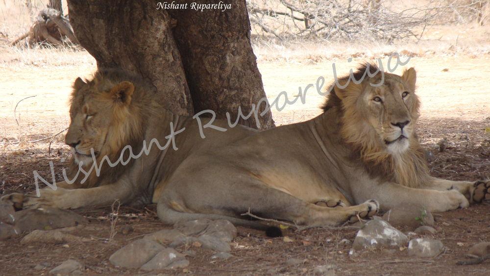 Photo in Random #wild-life