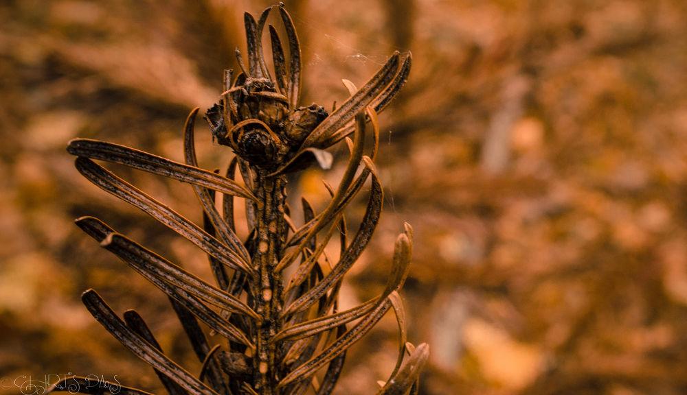 Golden harvest by Chris Das