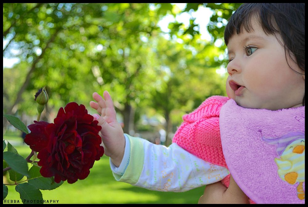 Love flower by HebbaPhotography