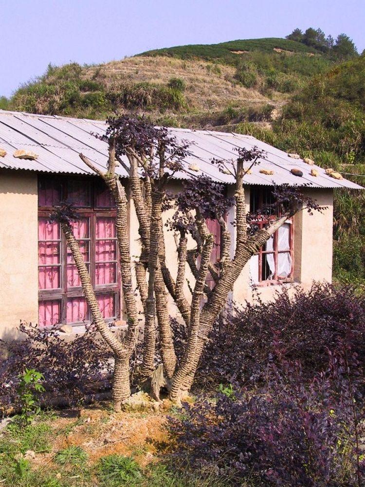 Zhejiang_Countryside-114 by Arie Boevé