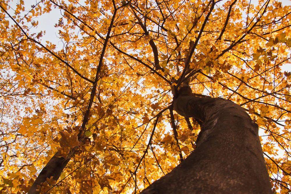 fall by AminDogoonchi
