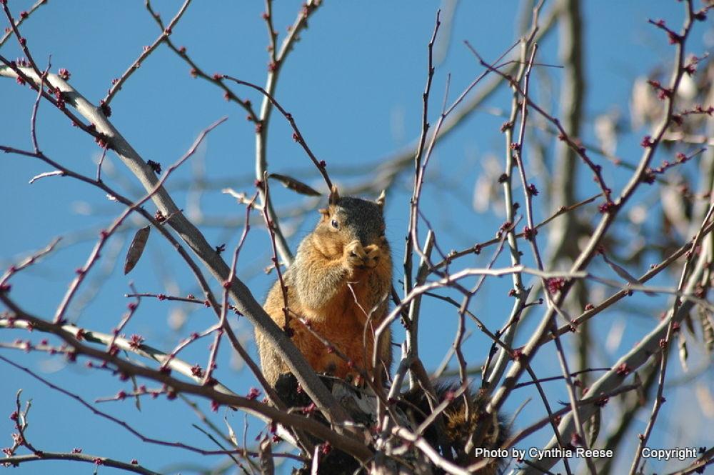 Squirrel by dewmtnbug