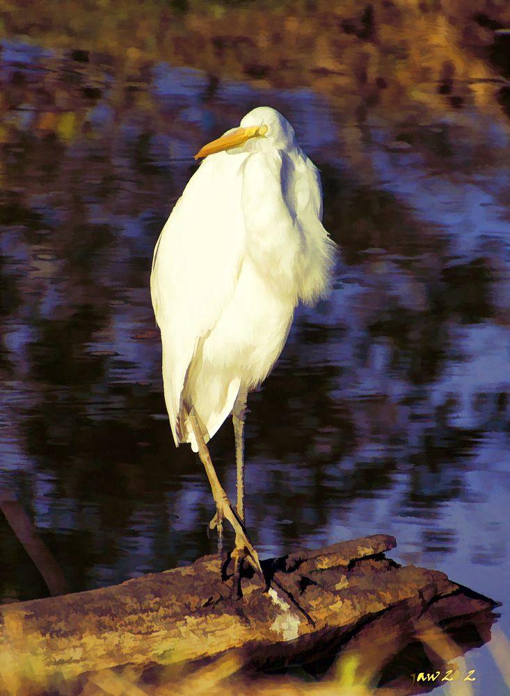 Bird on a log by jwbama