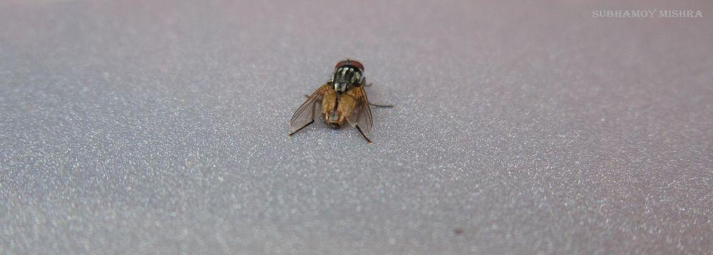 Fly by subhamoy mishra