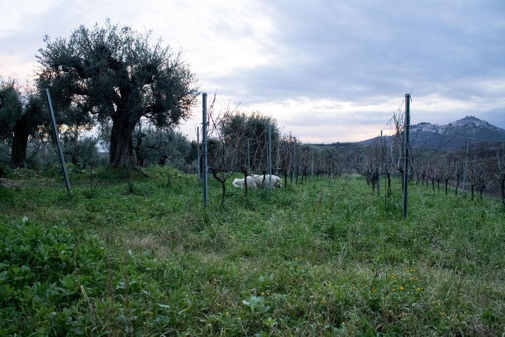 Landscape by abbddella