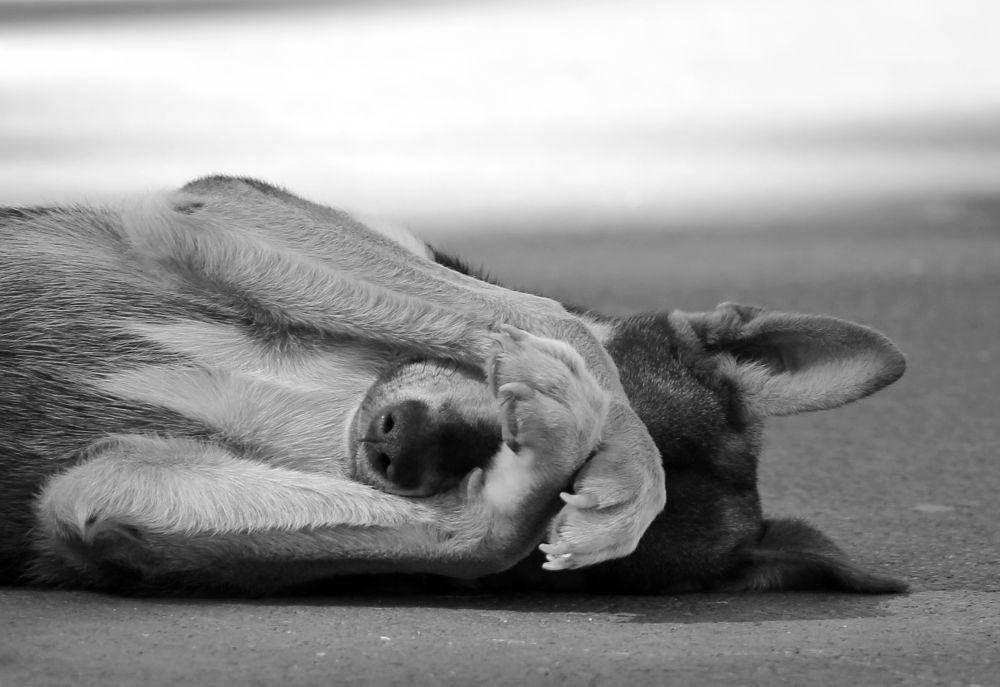 I Wanna Be Your Dog  by Kar Yan