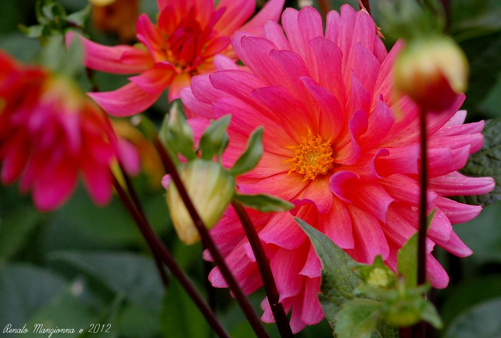 flower (3) by Renato Manzionna