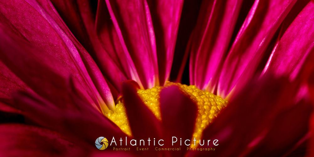 Flowers12x24 by AtlanticPicture