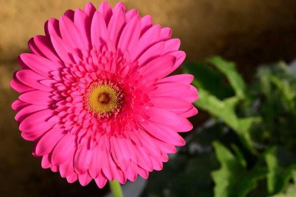 Photo in Random #flower #brazil