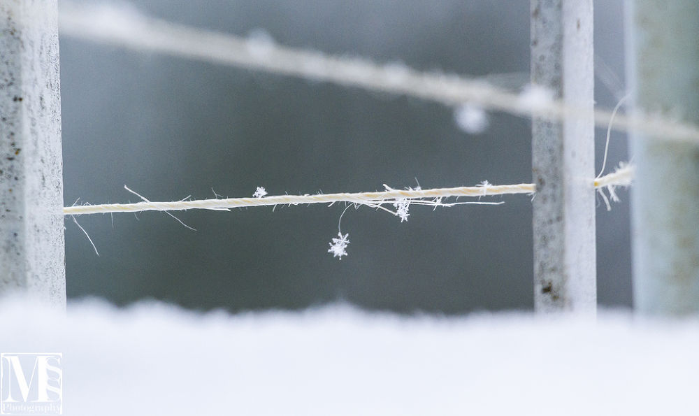 Snow by mssphotography