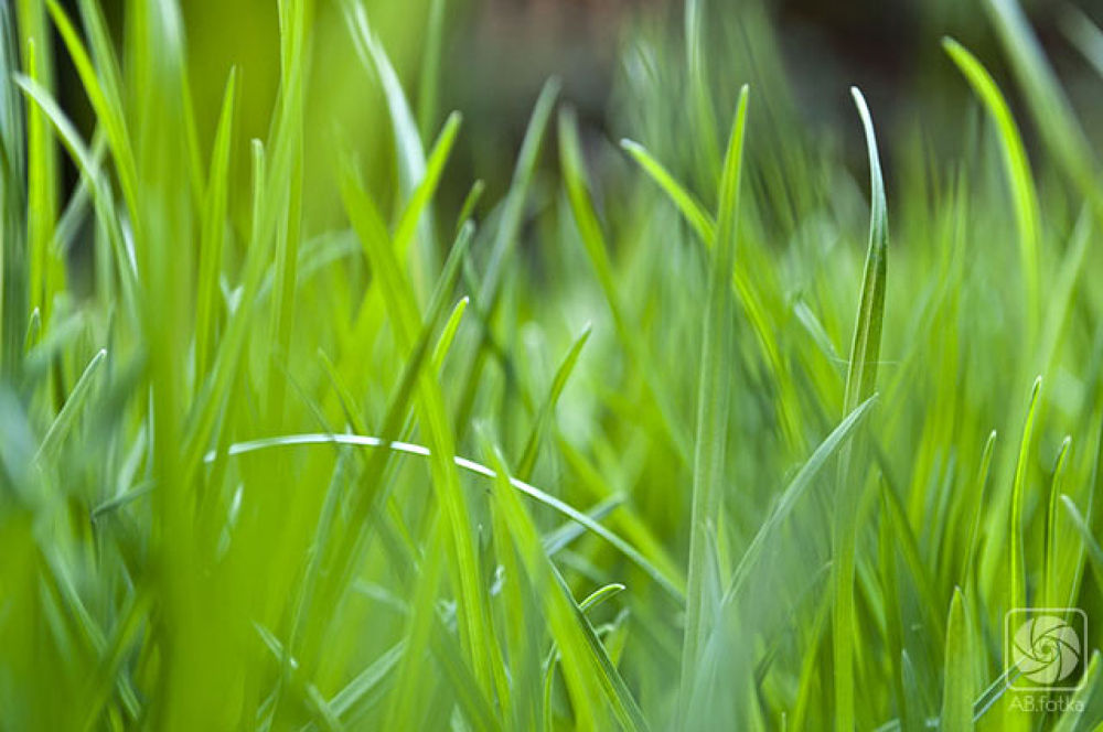 Grass 2 by Adam Budziarek