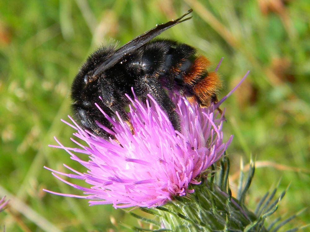 bee by waynesmith6