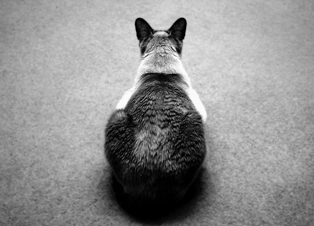 Contemplating by Alfie Shillingford