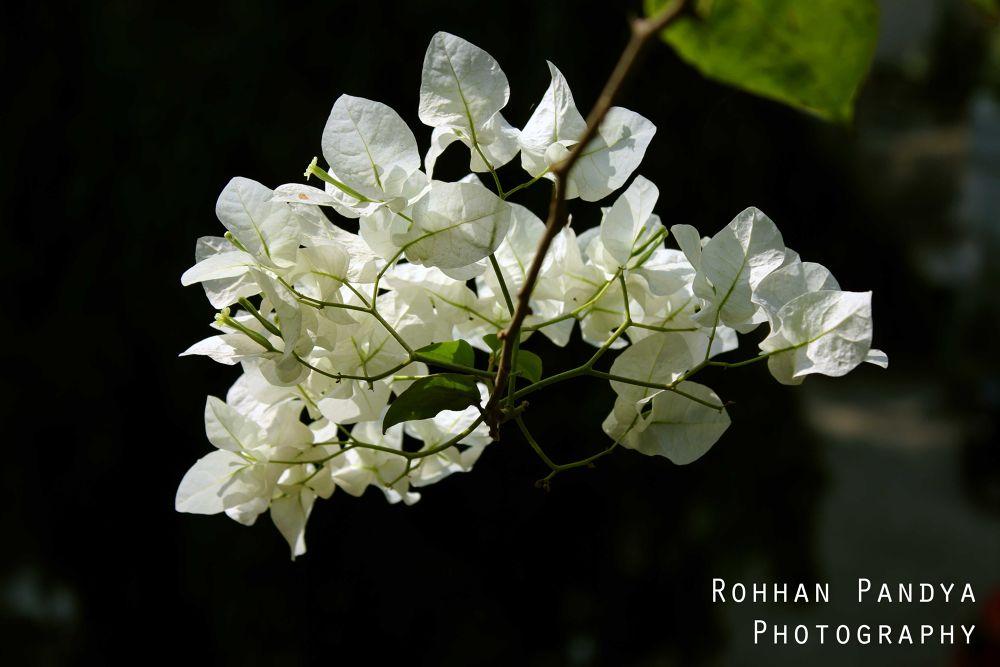 IMG_2143 by rohhanpandya