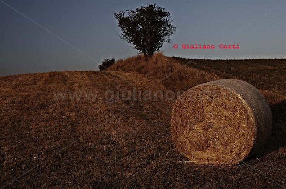 Paglia mg-5037 by Giuliano_Corti