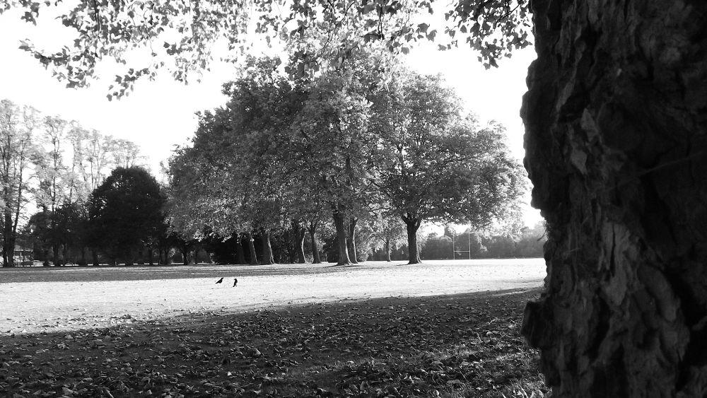 ArboresNobilitatis01bw by Zayd_Depaor