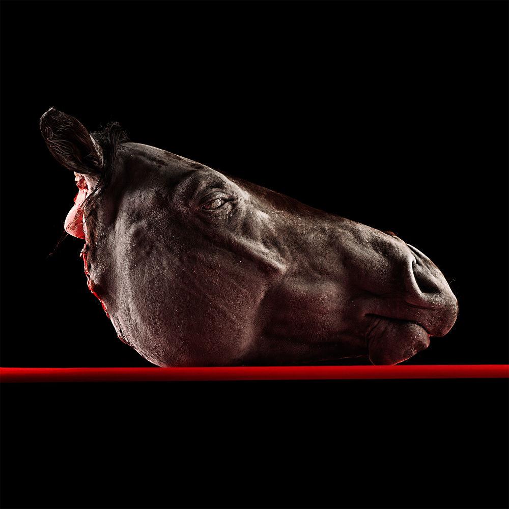 01 Cavallo by strafellaantonio