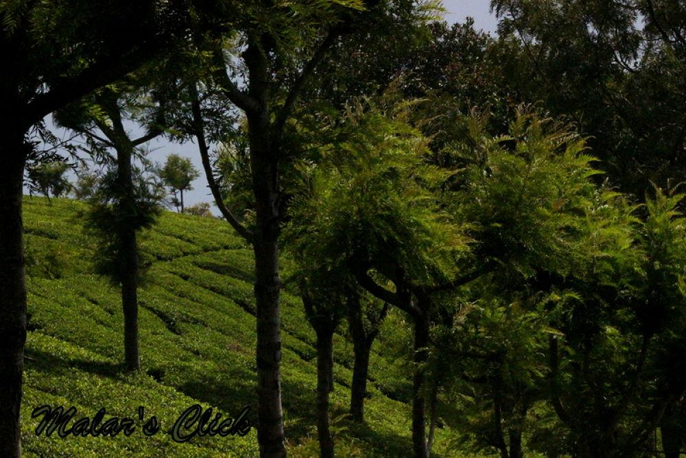 IMG_2135 by malarvizhiramesh