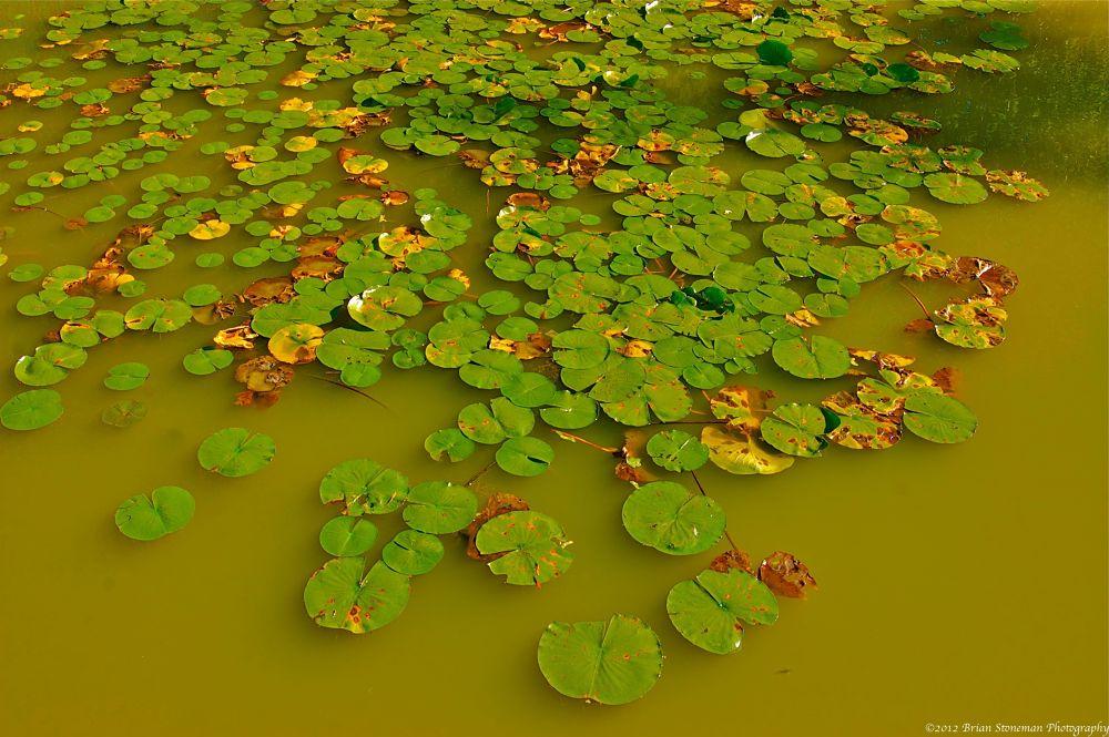 Photo in Random #park #water #green #chicago #pond #illinois #washington #lillie