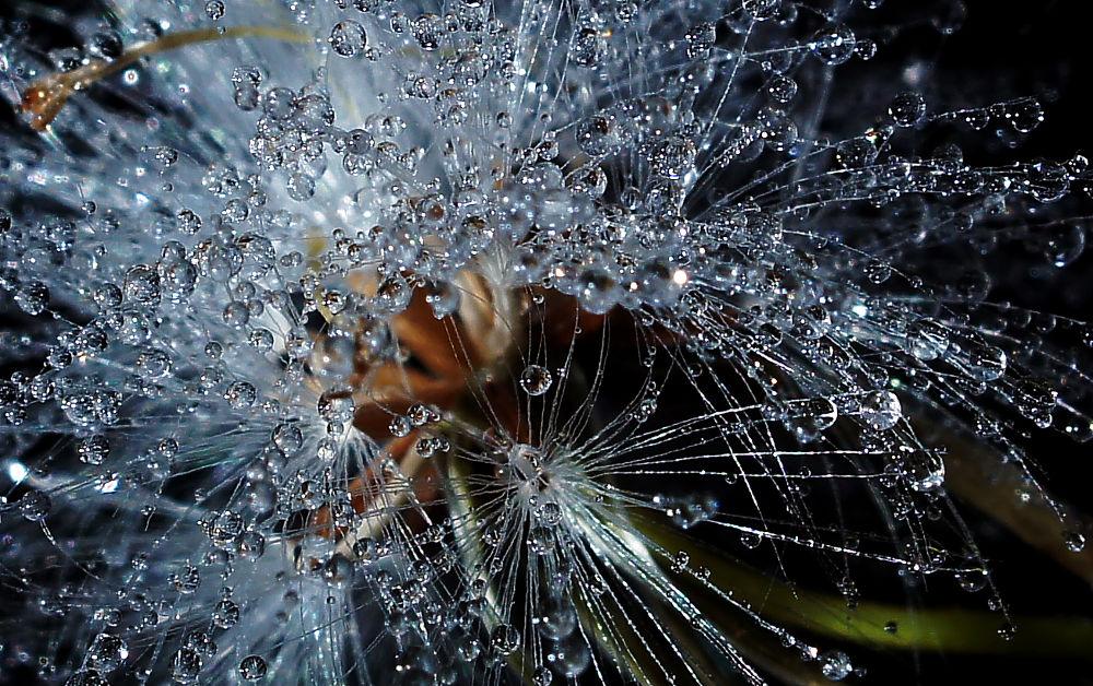 Dewdrop. by tamz