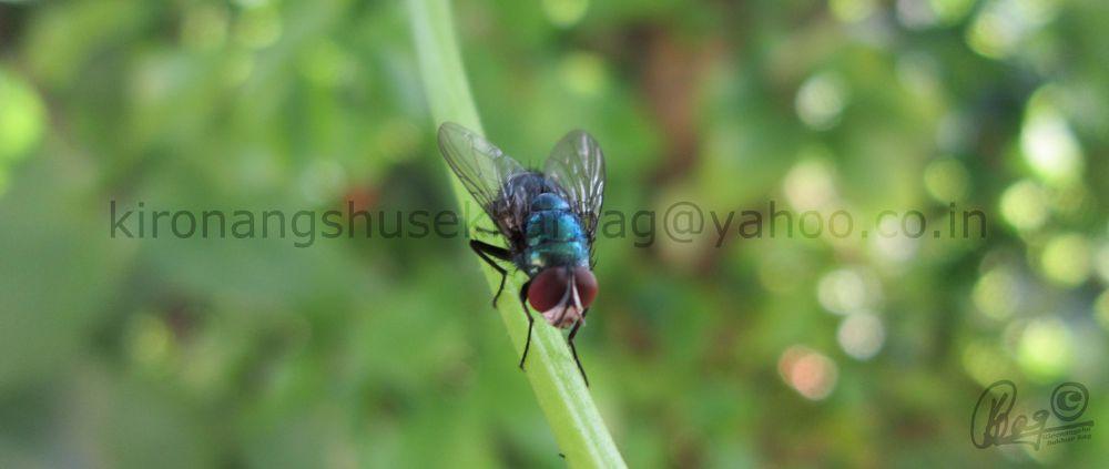 blue fly by Kironangshu Sekhar Bag