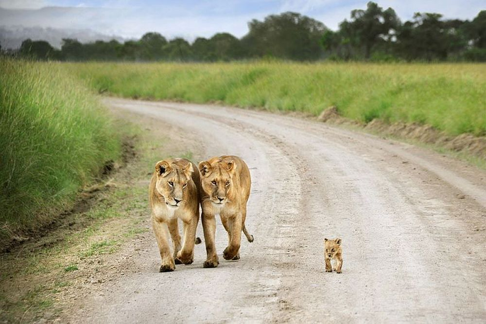 Family by Lalit