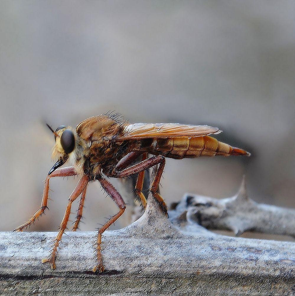 katil sinek by KadirAKAR