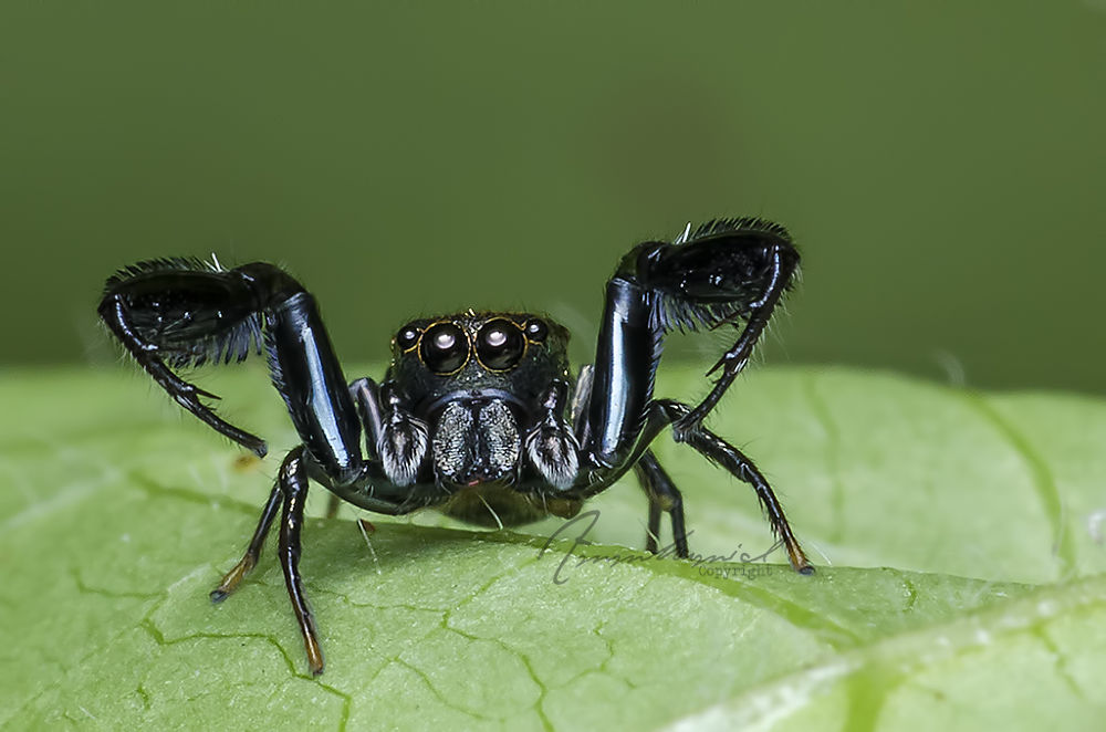 I AM Spider by AmmHamid