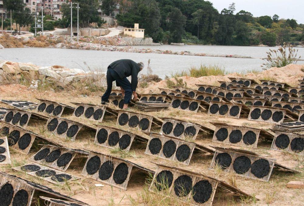Fujian_seaweed_harvest_105 by Arie Boevé