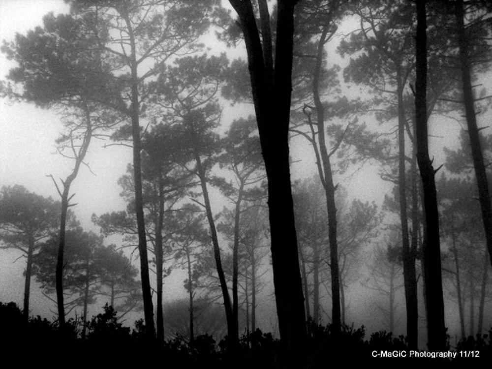 Signal Hill misty trees 1 by ClaraMaGiC