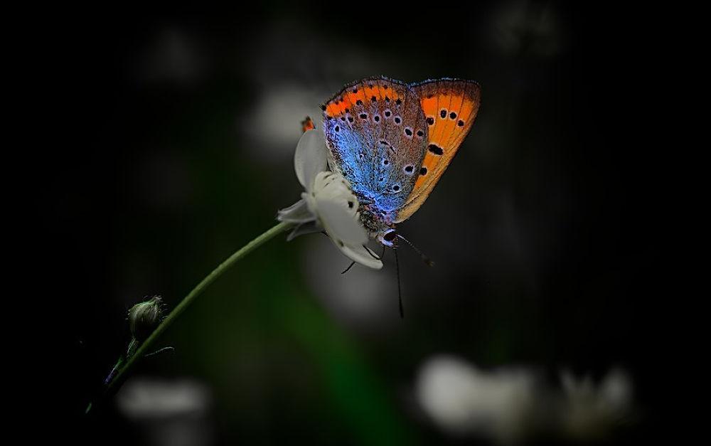 _MG_3793 (1) by berlo