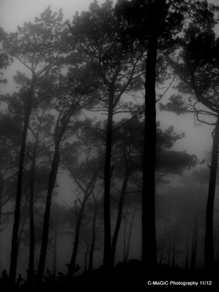 Signal hill misty trees 2 by ClaraMaGiC