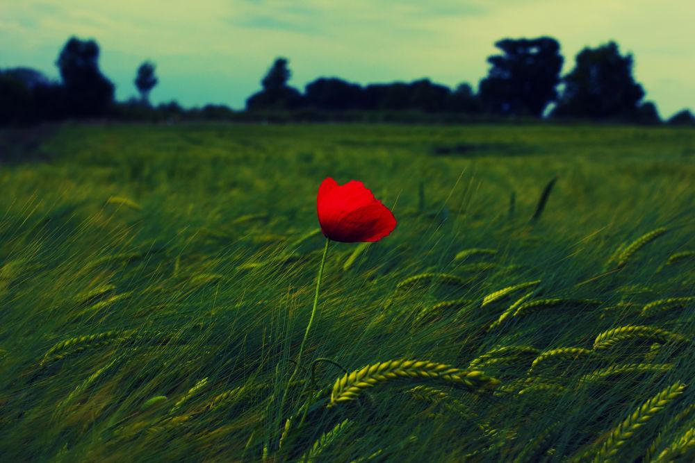 red flower by alex51091