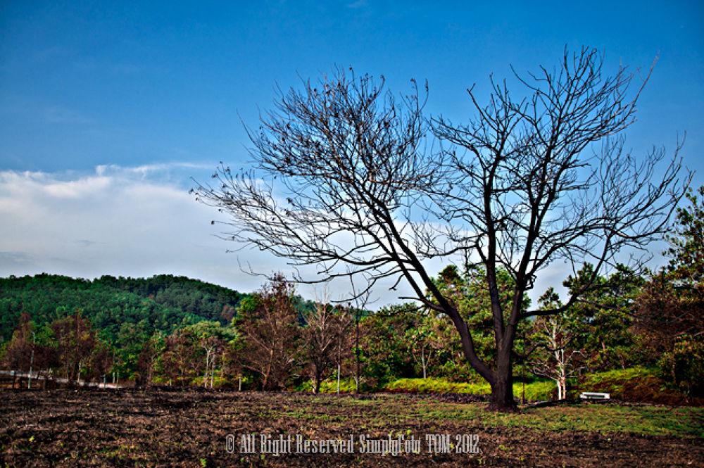 Photo in Landscape #landscape