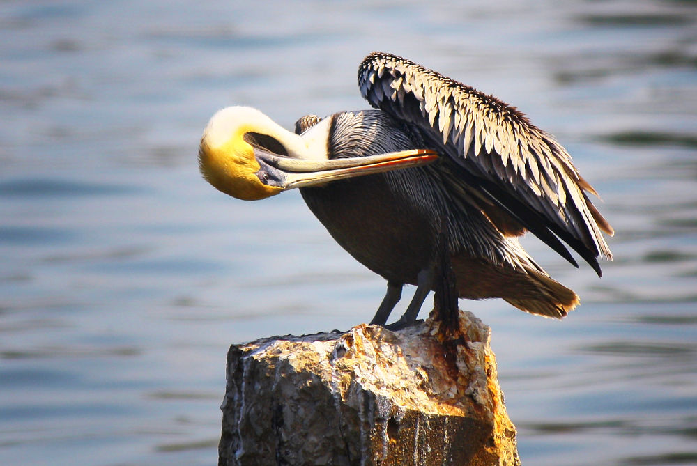 Pecking by Jorge Coromina