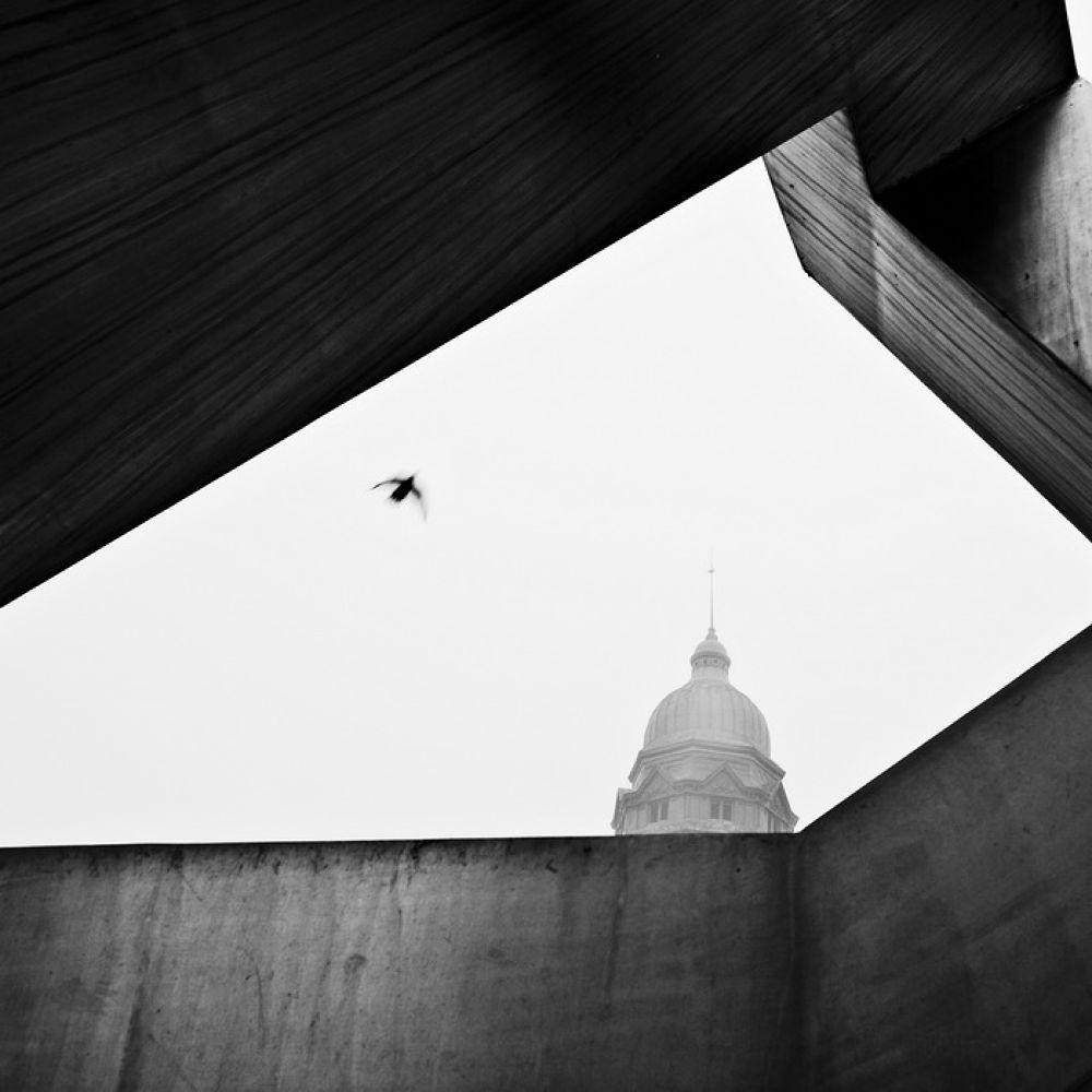 Bird by AdrianR
