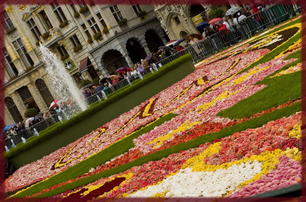 Bruxelle..la gran'place sous un parterre de fleurs  by photosdan