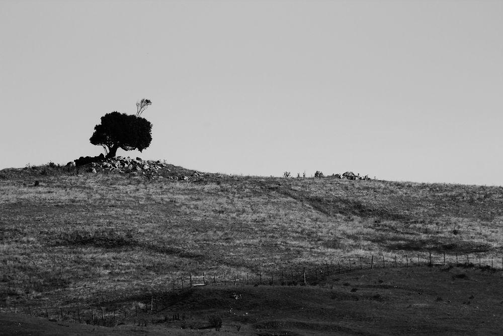 Photo in Random #california #sonoma
