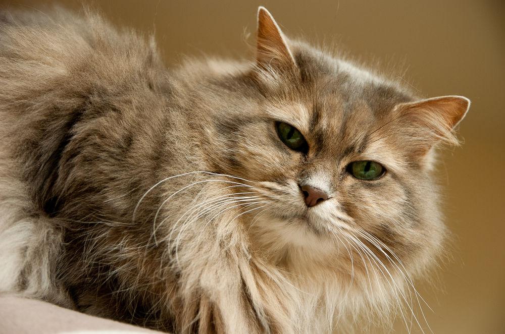 Cosette rien que pour tes yeux!!! by photosdan
