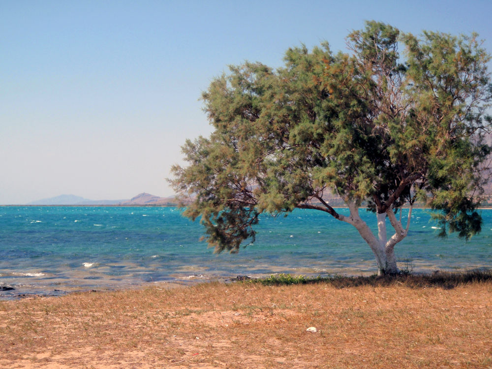 Photo in Random #elafonisos