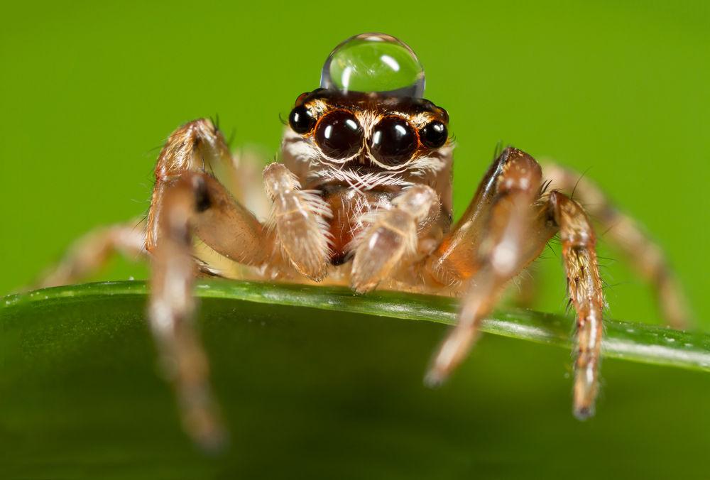 spider_drop by kalistez