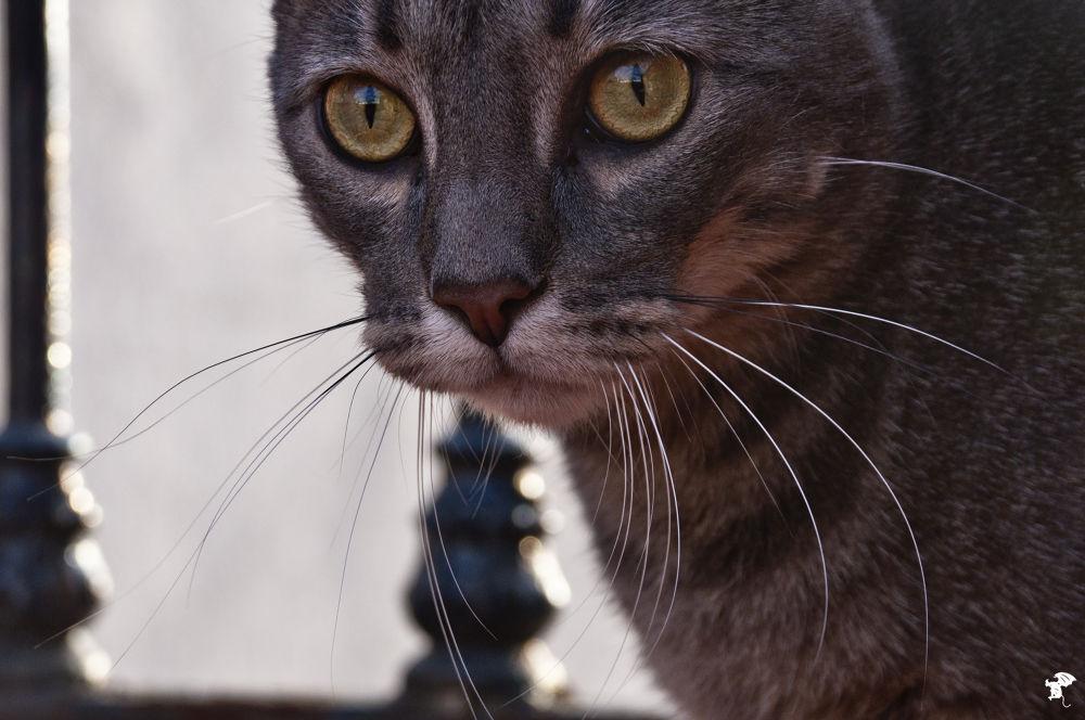Photo in Animal #animal #mirada #gato #felino #atento #bigotes #largos
