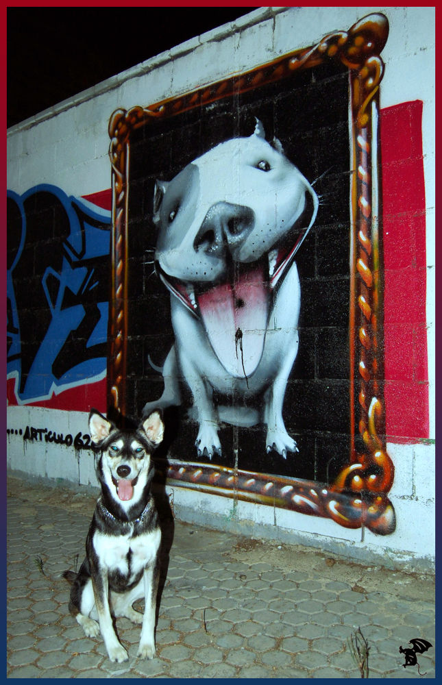 Photo in Animal #animal #graffiti #perro #pared #canino #sonrrie #mascota #adiestrada