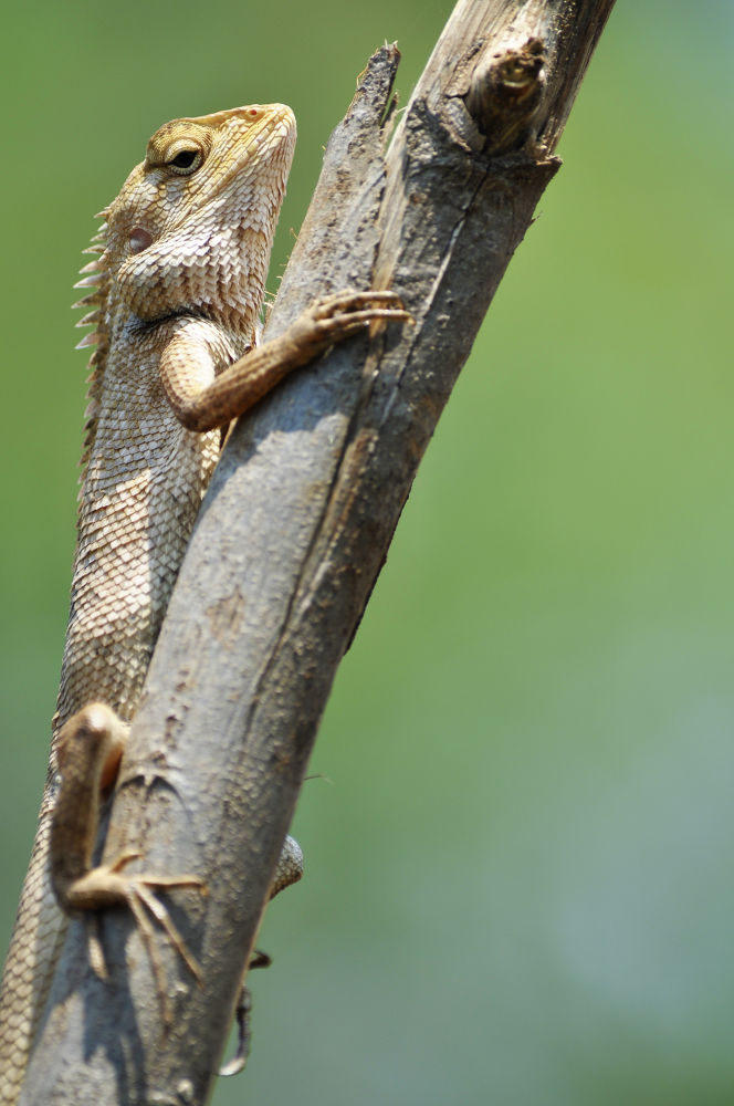 gecko by hieumacr